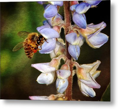 Metal Print featuring the photograph Springtime II by Dawn Currie