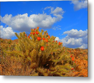 Springtime In Arizona Metal Print by James Welch