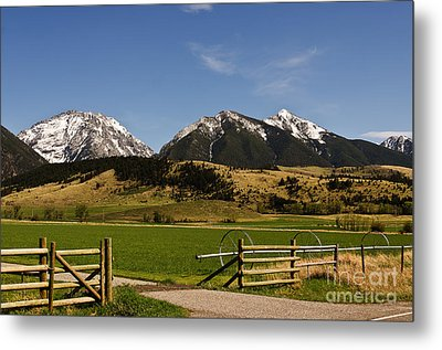 Metal Print featuring the photograph Springtime In Montana by Sue Smith