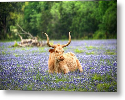 Springtime In Texas Metal Print