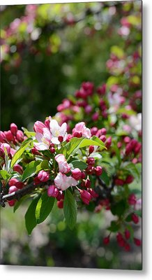 Metal Print featuring the photograph Springtime by Linda Mishler