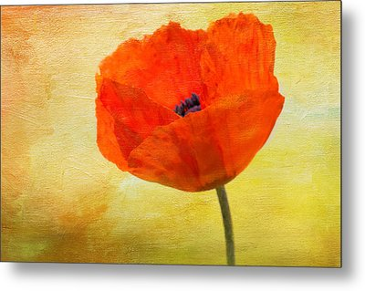 Springtime Poppy Beauty Metal Print