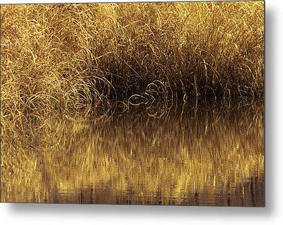 Spun Gold Metal Print by Annette Hugen