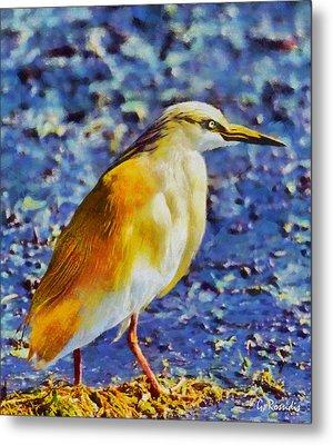 Squacco Heron Metal Print by George Rossidis