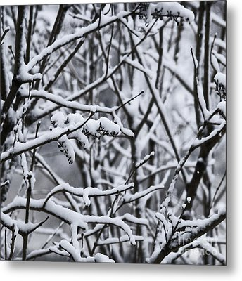 Square Snowy Branches Metal Print by Birgit Tyrrell