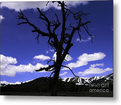 Metal Print featuring the photograph Squigly Tree by Janice Westerberg
