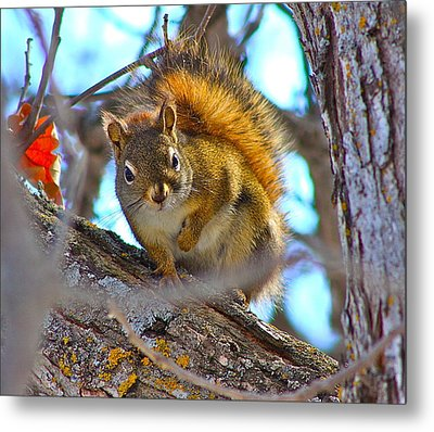 Squirrel Duty. Metal Print