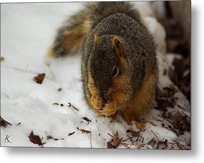 Squirrel Eating Metal Print