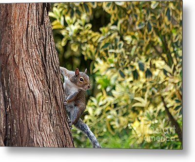 Metal Print featuring the photograph Squirrel by Kate Brown