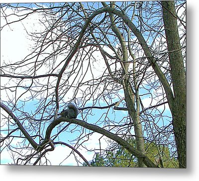 Metal Print featuring the photograph Squirrel Maze by Pamela Hyde Wilson