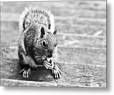 Squirrel Metal Print by Paulina Szajek