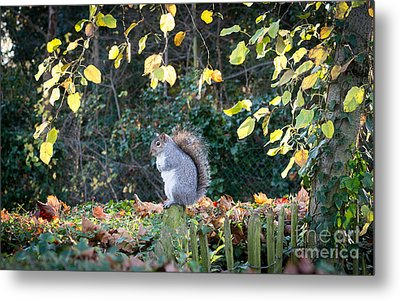 Metal Print featuring the photograph Squirrel Perched by Matt Malloy