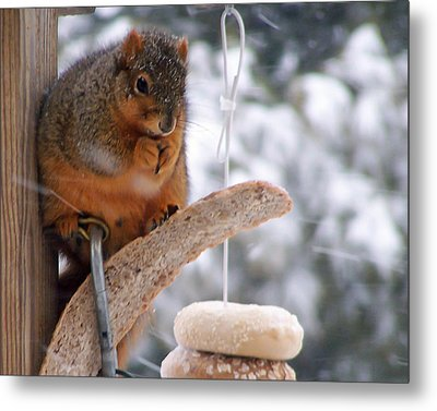 Squirrel Snack II Metal Print
