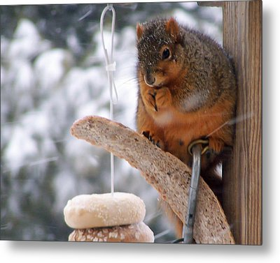 Squirrel Snack IIi Metal Print