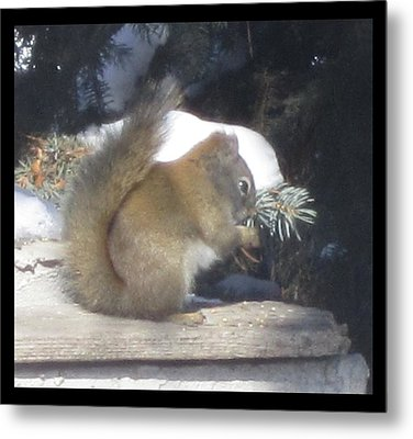 Squirrel Three Metal Print by Cathy Long
