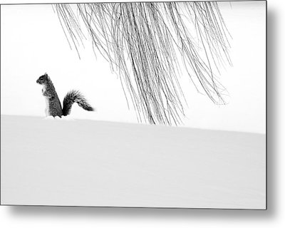 Squirrel Metal Print by Yue Wang