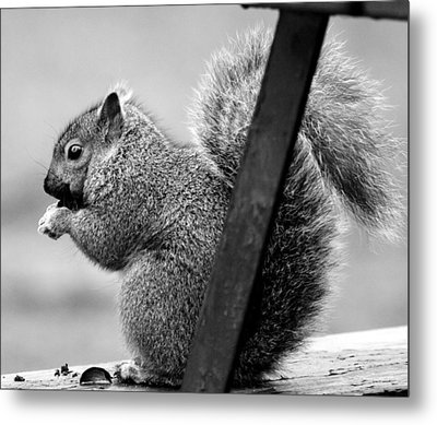 Metal Print featuring the photograph Squirrels by Ricky L Jones