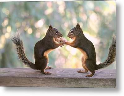 Squirrels That Share Metal Print