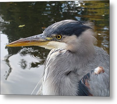 Metal Print featuring the photograph Sr Heron  by Cheryl Hoyle