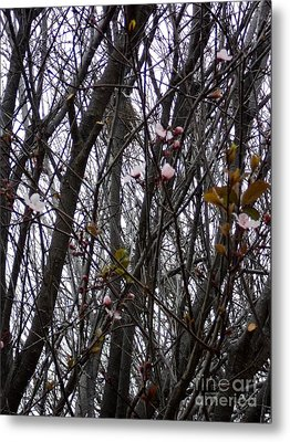 Metal Print featuring the photograph Spring Blossoms by Carla Carson