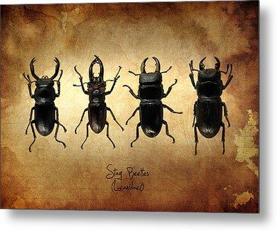 Stag Beetles Metal Print by Mark Rogan