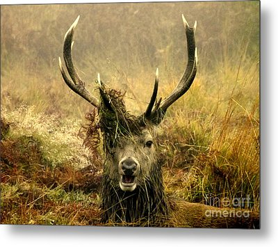 Stag Party The Series. One More For The Road Metal Print