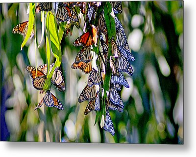 Stained Glass Butterflies Metal Print