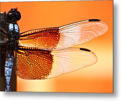 Stained Glass Metal Print by Mark Alder