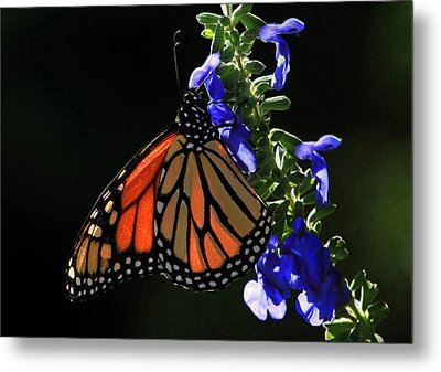 Stained Glass Wings Metal Print by Donna Kennedy