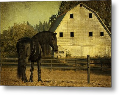 Stallion At Rest D1535 Metal Print by Wes and Dotty Weber