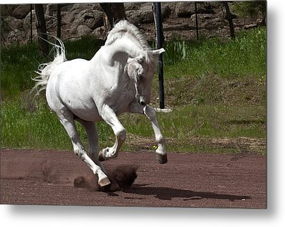 Stallion Metal Print by Wes and Dotty Weber