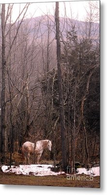 Stallion In The Mountain Pasture Metal Print by Patricia Keller