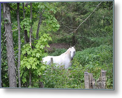 Stallion On Independence Day Metal Print by Patricia Keller