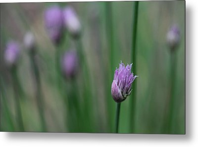 Metal Print featuring the photograph Not Just A Pretty Flower by Debbie Oppermann
