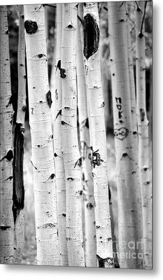 Stand Tall Aspens Metal Print by Ruth Jolly