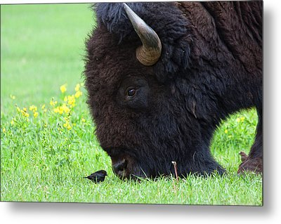 Stand Your Ground Metal Print by Jim Garrison