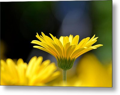 Standing Above The Rest Metal Print by Maria Urso
