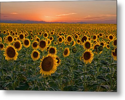 Standing At Attention Metal Print by Ronda Kimbrow