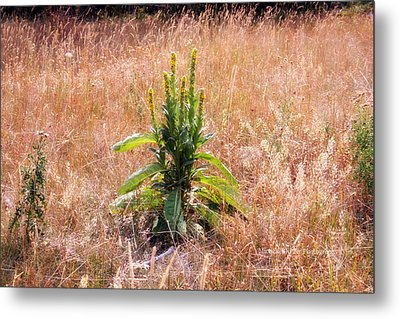 Standing Green Metal Print by Michele Richter