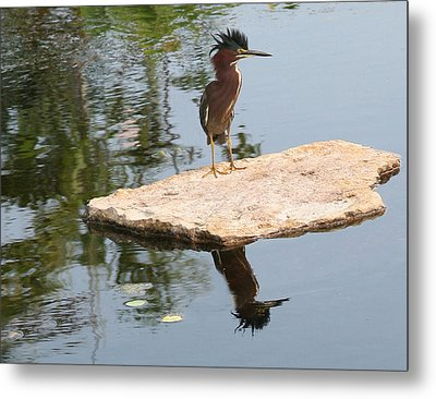 Standing Guard Metal Print by Carol Kinkead