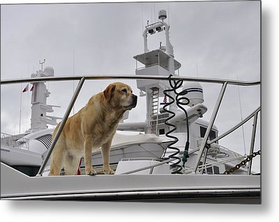 Standing Guard Metal Print by Cathy Mahnke