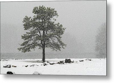 Metal Print featuring the photograph Standing In A Snow Storm by Brenda Bostic