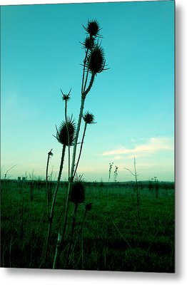 Standing Metal Print by Lucy D