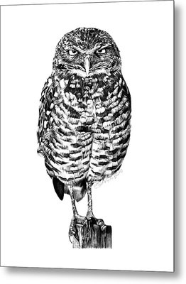 041 - Owl With Attitude Metal Print by Abbey Noelle