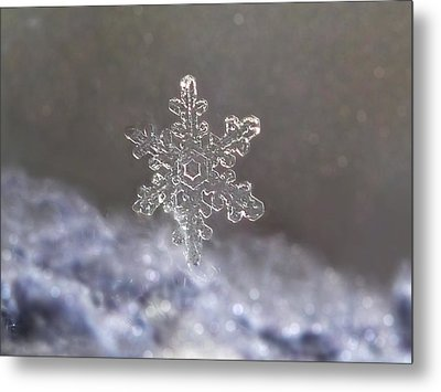 Metal Print featuring the photograph Standing Snowflake by Lorella  Schoales
