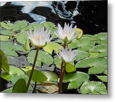 Metal Print featuring the photograph Standing Tall by Chrisann Ellis