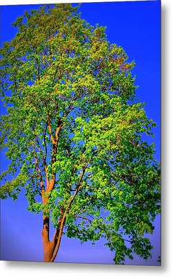 Standing Tall Metal Print by Mary Beth Landis