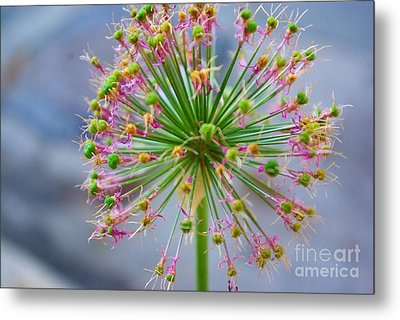 Metal Print featuring the photograph Star Burst by John S