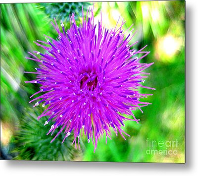 Metal Print featuring the photograph Star Burst by Kathy Bassett