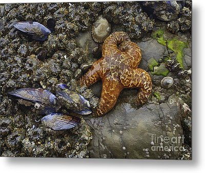 Star Fish Metal Print by Sharon Foster